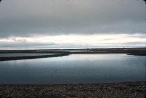 Alaska, Cooper Island, Barrow, The Arctic Circle, Svalbard, wild, Black Guillemots,