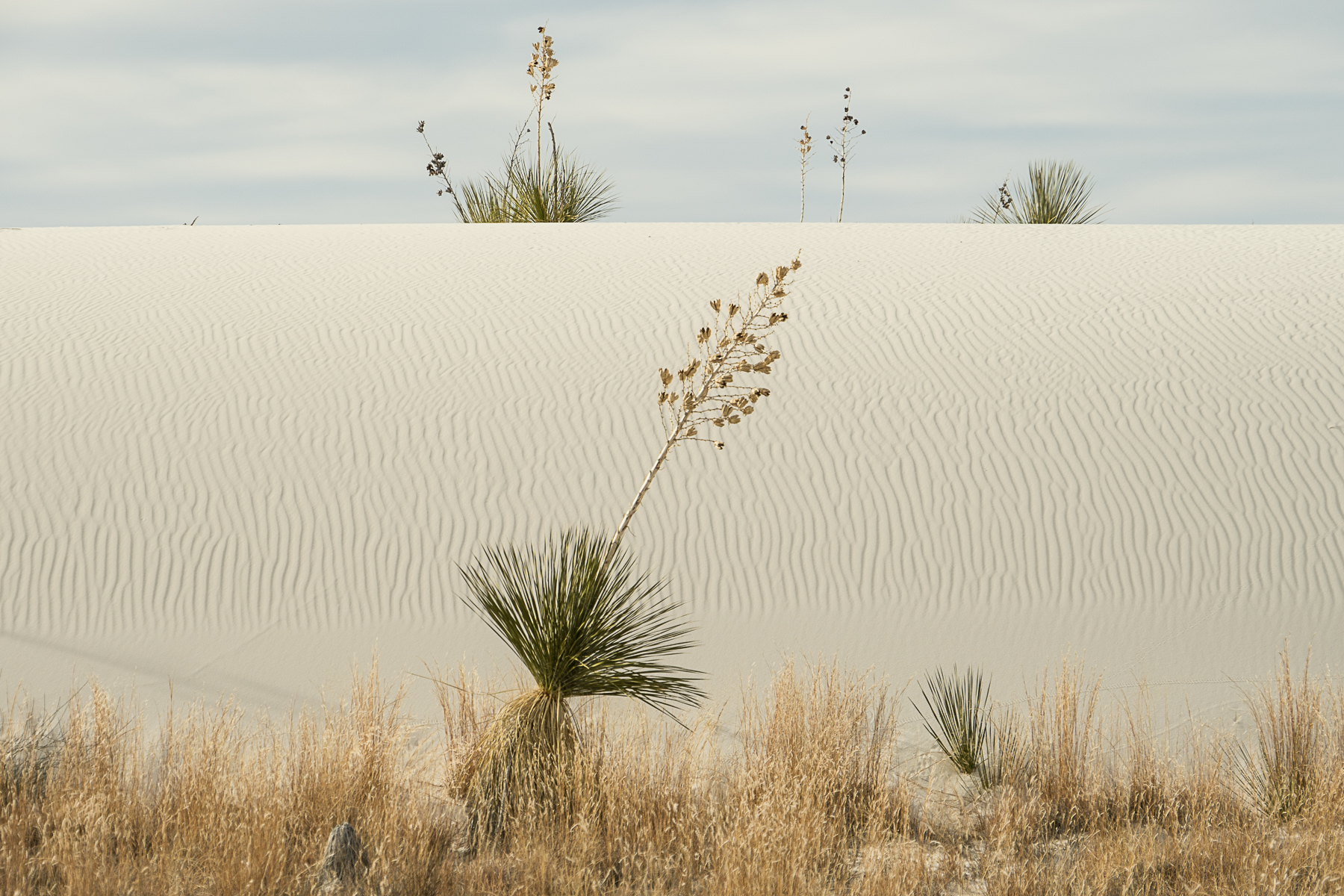 White Sands, New Mexico, desert, agave, yucca, National Monument
